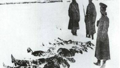 Bild von Çoğu Donarak Şehit Olan 76 Bin Askerin Dramı